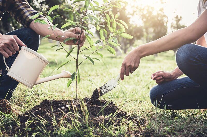 Planter des arbres au Royaume Uni
