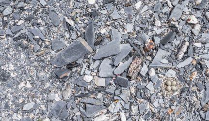 slate rock
